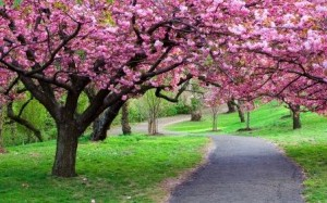 Why Spring is Important for your Fitness